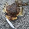 釣れない人への処方箋/ショアジギングで釣れないのは道具のせいでもウデのせいでもな